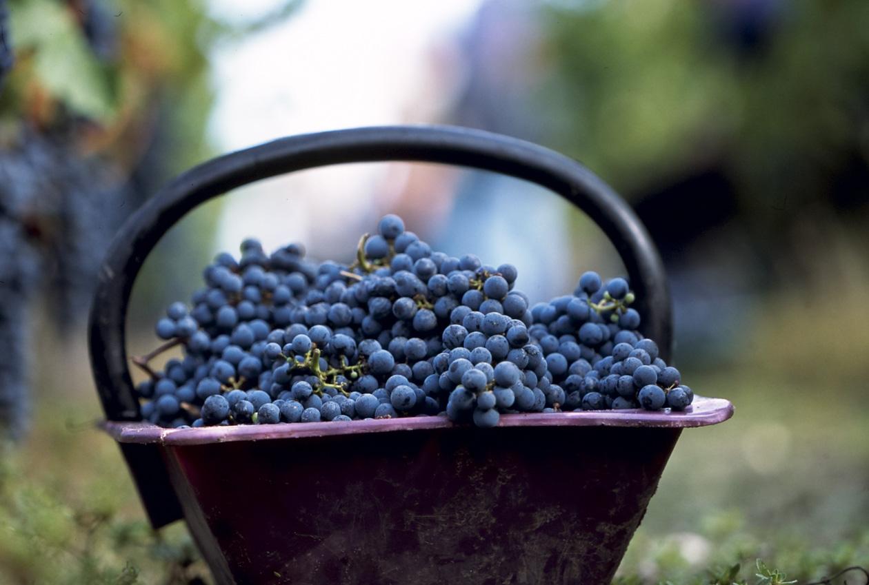 Galvin Restaurants - Wine Dinners